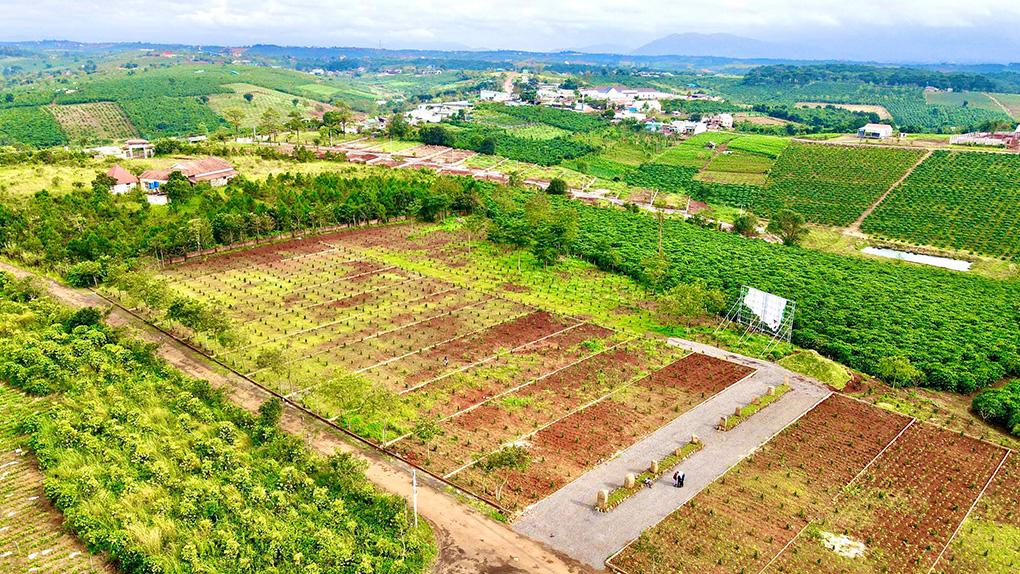 tiến độ dự án sunflower hill đồi hoa hướng dương